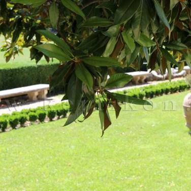 Parco di Pratolino, Villa Demidoff Park: a tájképi park a kertrekonstrukció révén őrzi kertépítészeti történeti értékeit
