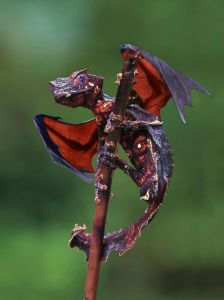 dragonGecko