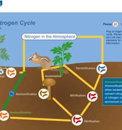 nitrogen cycle lesson plan a complete science lesson using the 5e statements the nitrogen cycle diagram [ 1024 x 820 Pixel ]