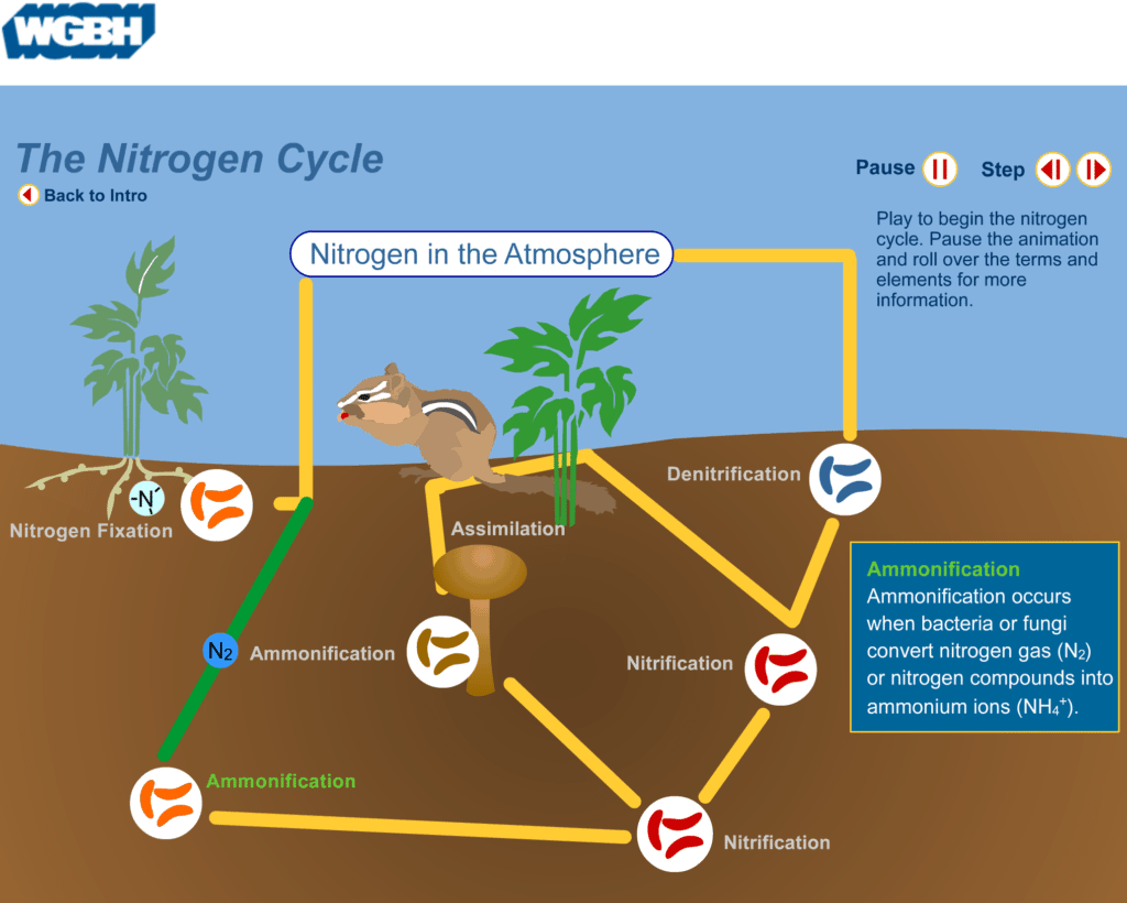 hight resolution of nitrogen cycle 5e lesson