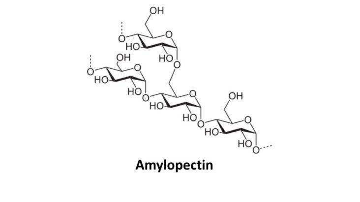 Amylopectin | keto-vegan.com