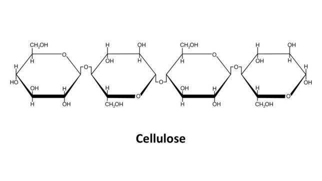 Cellulose | keto-vegan.com