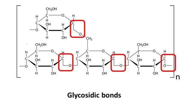 Glycosidic Bonds | keto-vegan.com