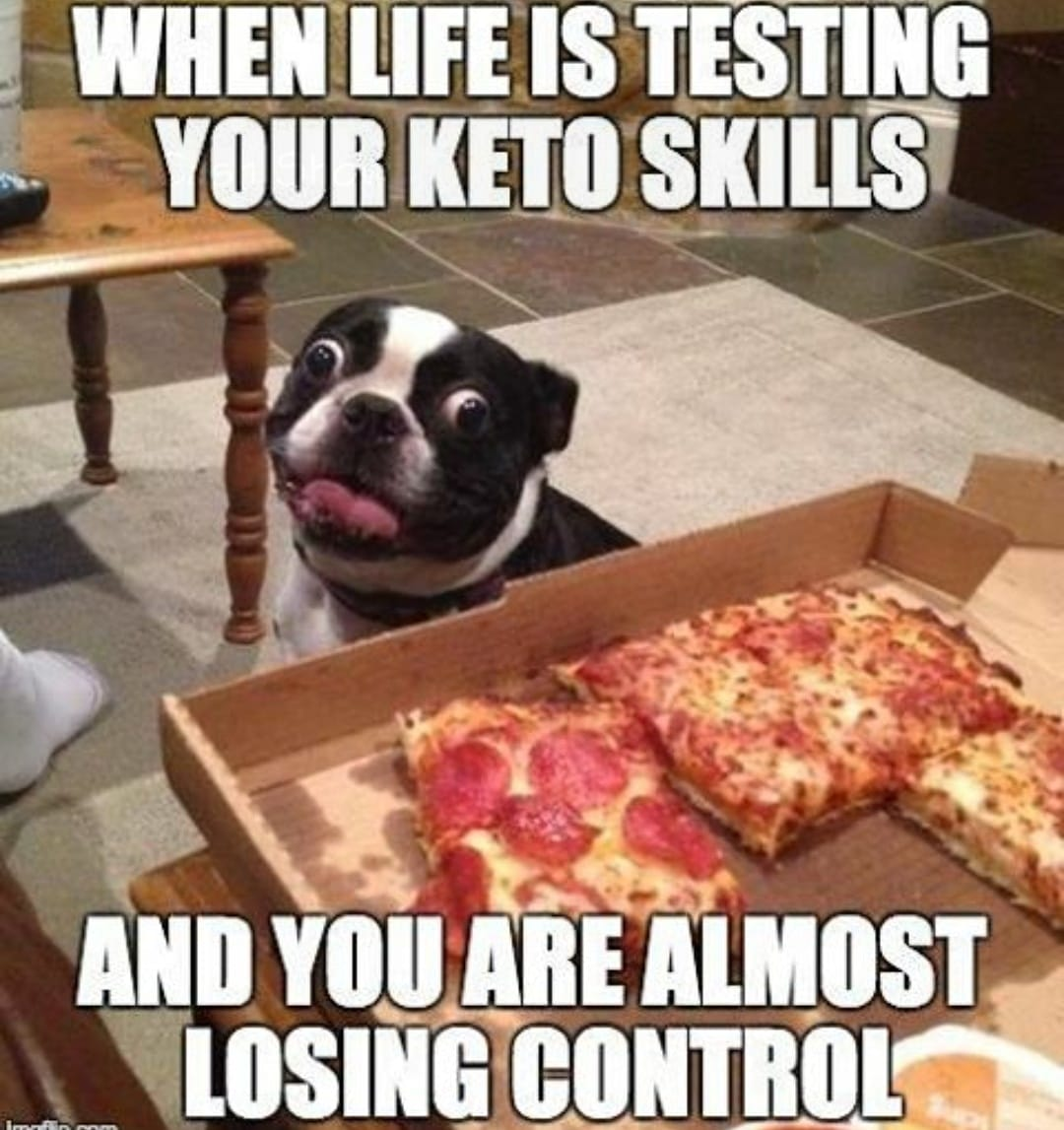 losing control of your diet dog staring at pizza when on keto
