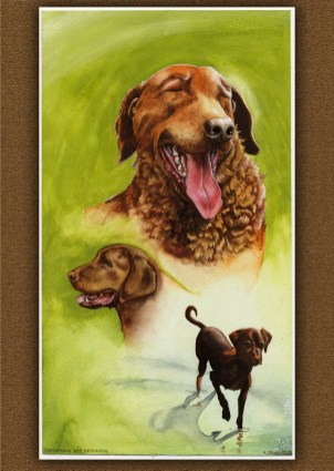 Chesapeke Bay Retriever big