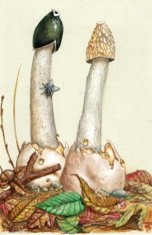 Stinkhorns_1989_by_kevcrossley