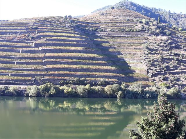 vinicolas no douro
