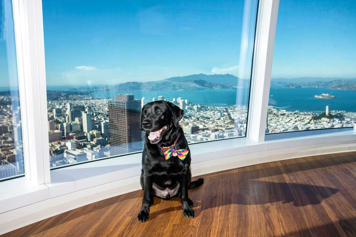 Up on top in the Salesforce tower