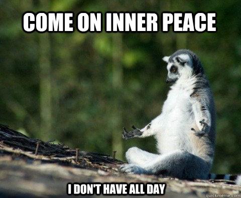 meditation-raccoon