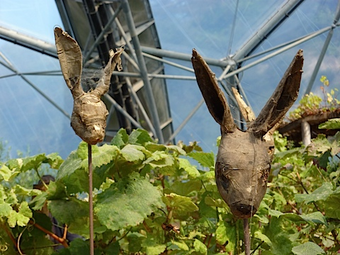 Eden Project Bunny Head