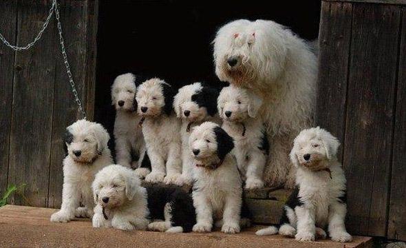 A Fuzzy Family Portrait