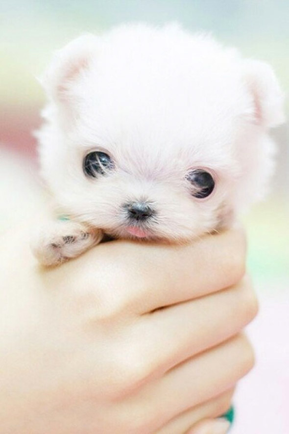 Pocket Cuteness