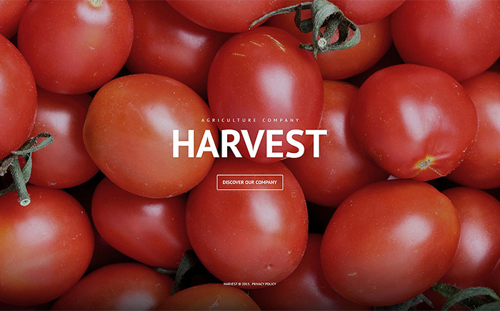 Harvest – Agriculture Firm WordPress Template