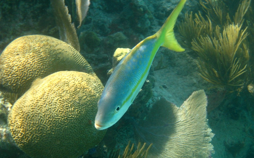 St. John, USVI: Underwater Shots