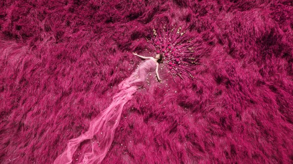 Laura Hollick Magenta Dream