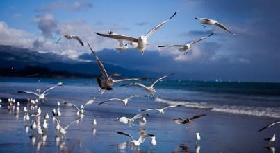 Freedom in Santa Barbara