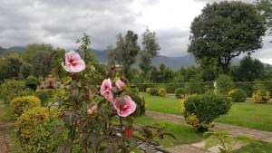 Hibiscus Spanish Garden Marlia