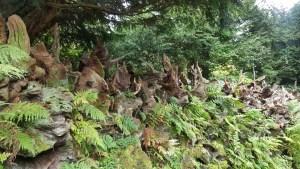 Biddulph Grange stumpery