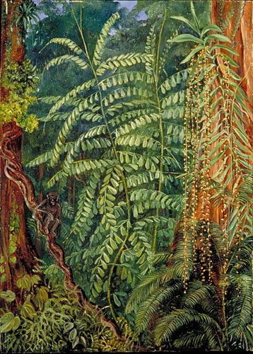 Kew Marianne North Gallery Painting 340 Vegetation and