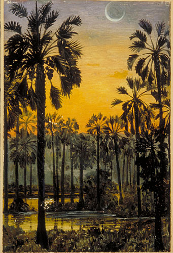 Kew Marianne North Gallery Painting 705 Palmyra Palms a
