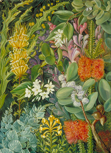 Kew Marianne North Gallery Painting 729 A Selection of West Australian Flowers