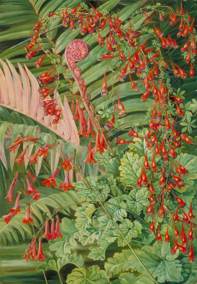 Fern and Flowers Bordering the River at Chanleon, Chili  Marianne North (1830–1890)