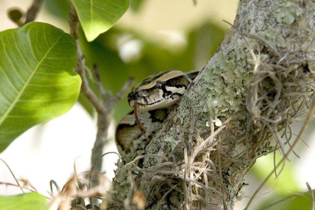 python-1398653_1280