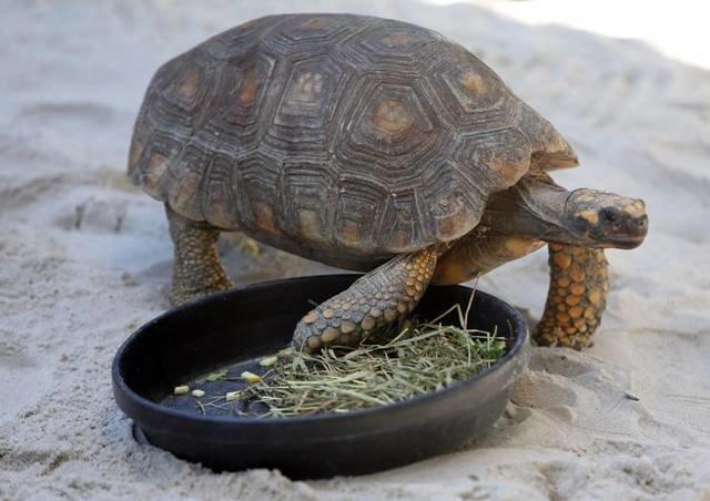 Puppy Tortoise 03 EKM