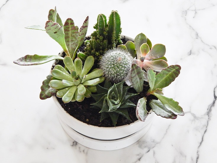I love succulents as home decor. This tutorial is so easy anyone can grow their own little garden in their home!