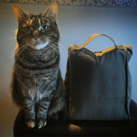 Widget Cat