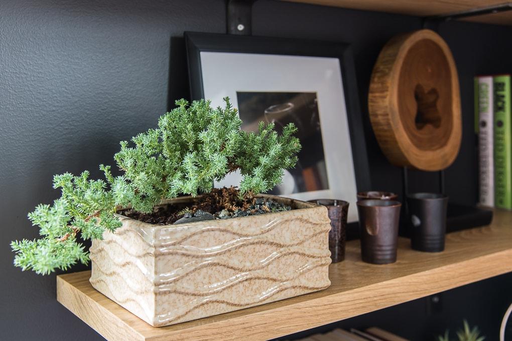 bonsai tree on a bookshelf