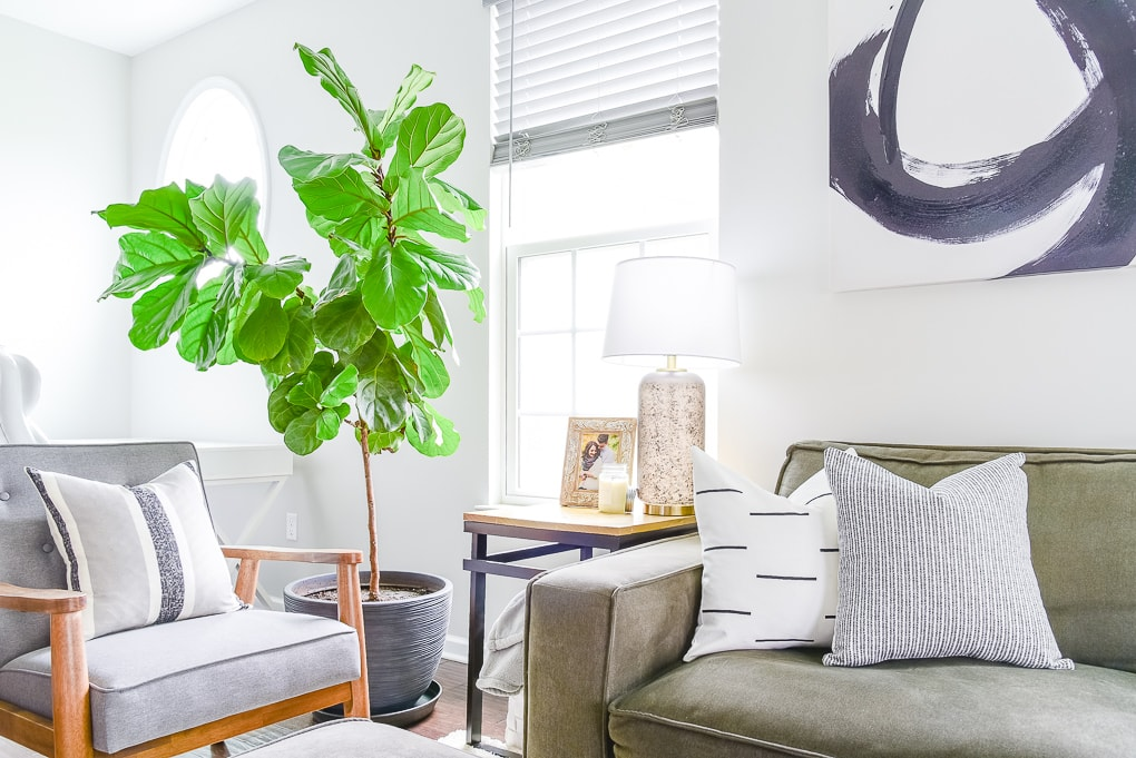 fiddle leaf fig tree next to end table and couch in living room