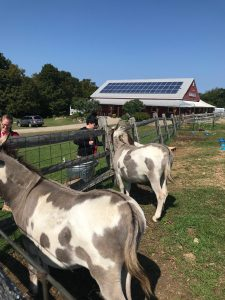 Student feeding the farm animals.