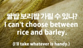16-cant-choose-rice-barley