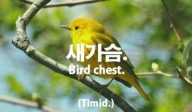 69-bird-chest