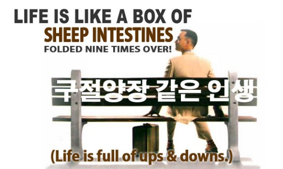 71-forrest-sheep-intestines