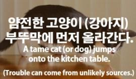 86-tame-cat