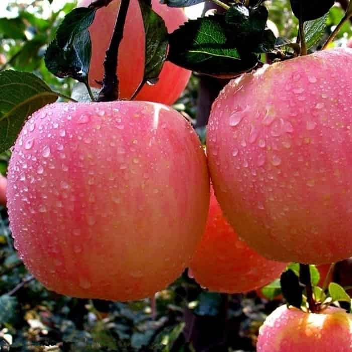 health benifits of apple