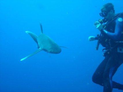 elphinstone-reef (2)