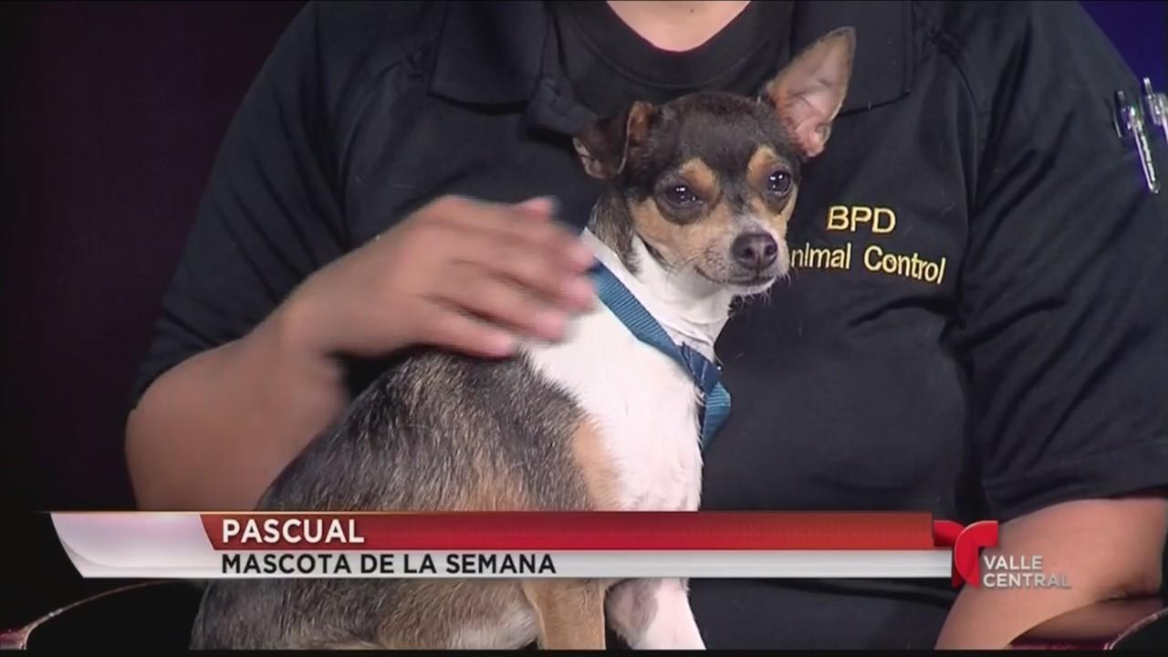 Conozca a Pascual la mascota de la semana