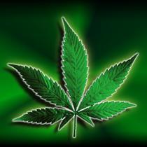 marijuana_-3722408492494992783