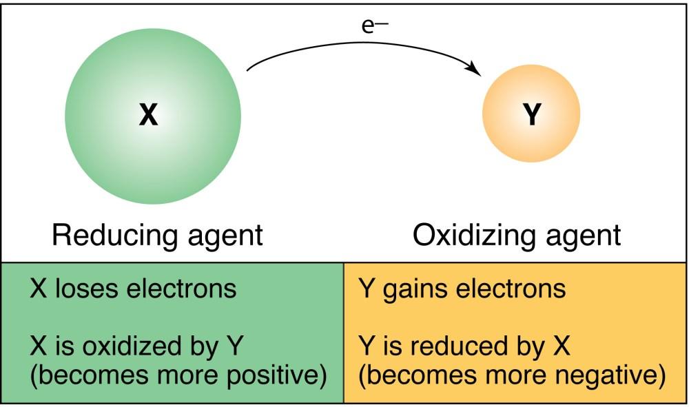 medium resolution of diagram of redox reaction wiring diagram megadiagram of redox reaction