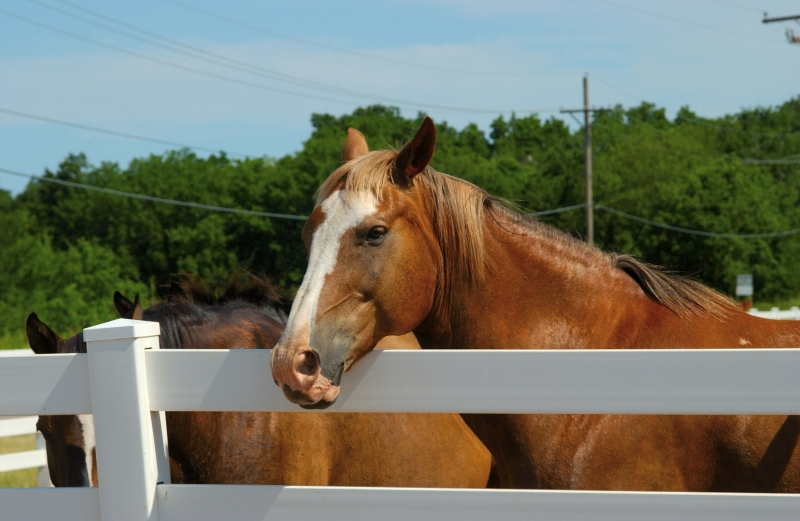 equine1