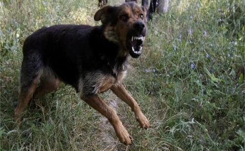 आवारा कुत्तों का शिकार बना एक मासूम