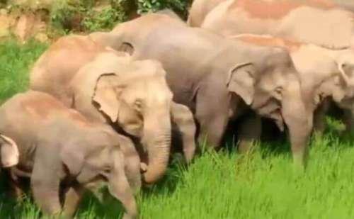 हाथियों के झुंड ने गांवों में घुसकर जमकर मचाया उत्पात