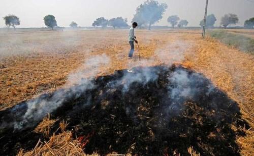 पराली जलाने के मामलों पर ऐसे लगेगी रोक, 22 IAS अधिकारी करेंगे ये काम