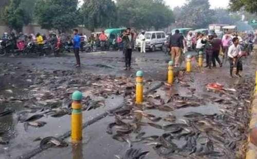 सड़क पर पलटा मछिलियों से भरा ट्रक, लोगों ने लूटी मछलियां !
