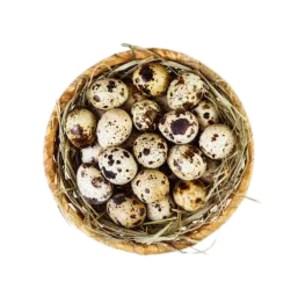 quail eggs 12pcs