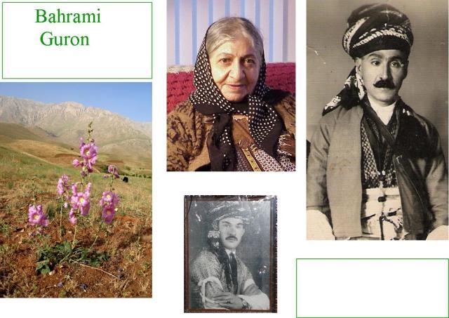 Bahrami1