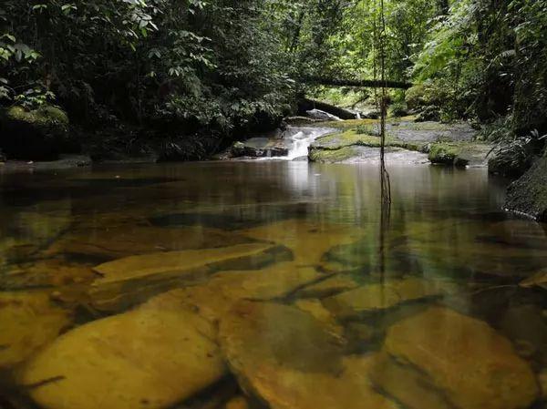 غابات الأمازون المطيرة، أمريكا الجنوبية